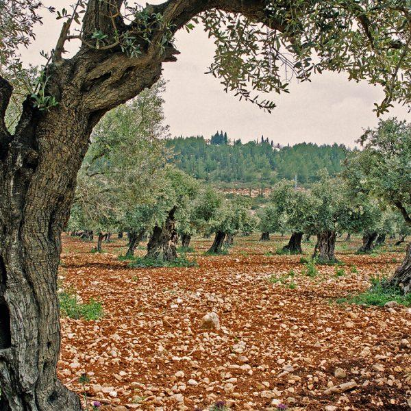 cooperativa galeria productos olivos