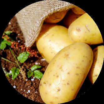 productos patatas de cosafra