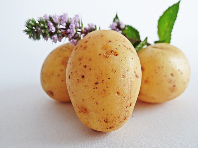 coopertativa productos patatas