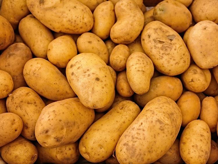 cooperativa galeria productos patatas 2